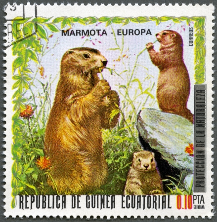 postal card: EQUATORIAL GUINEA - CIRCA 1976: A stamp printed in Equatorial Guinea, shows Marmot, series European Animals, circa 1976 Stock Photo