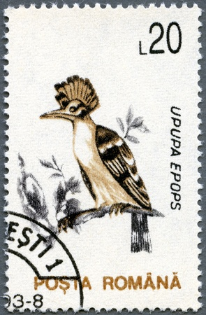 ROMANIA - CIRCA 1993: A stamp printed in Romania shows Hoopoe (Upupa epops), circa 1993 photo