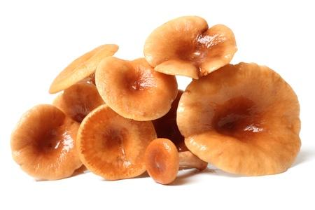 rufous: Rufous Milkcap (Lactarius rufus) Mushrooms on a white background Stock Photo