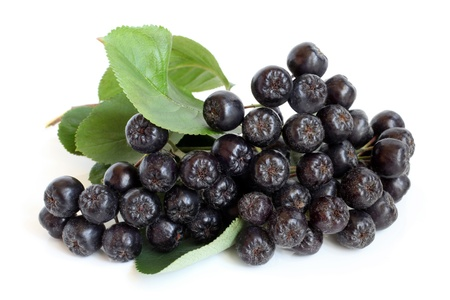 bacca: Black chokeberry on a white background