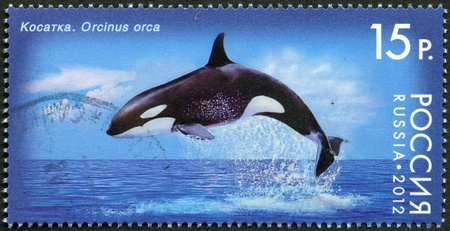 RUSSIA - CIRCA 2012: A stamp printed in Russia shows Killer Whale, series  Stock Photo - 15670766