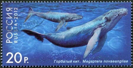 RUSSIA - CIRCA 2012: A stamp printed in Russia shows Humpback Whale, series  Stock Photo - 15670771