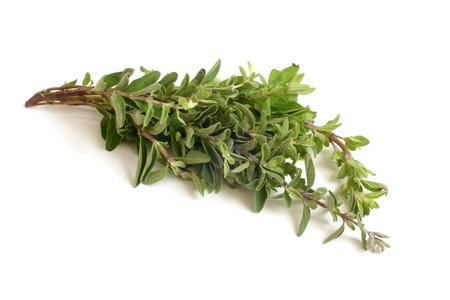 Fresh thyme twigs on a white background Stock Photo - 15824937