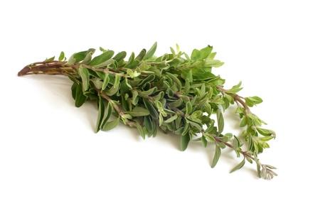 Fresh thyme twigs on a white background Stock Photo - 15824937