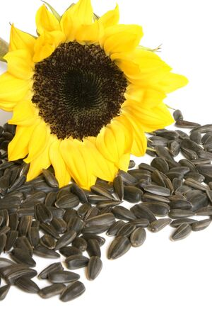 Yellow sunflower and sunflower seeds on a white background photo