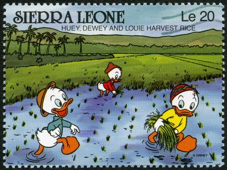 dewey: SIERRA LEONE - CIRCA 1990: A stamp printed in Sierra Leone shows Huey, Dewey, and Louie harvest rice, Walt Disney Characters, circa 1990 Editorial