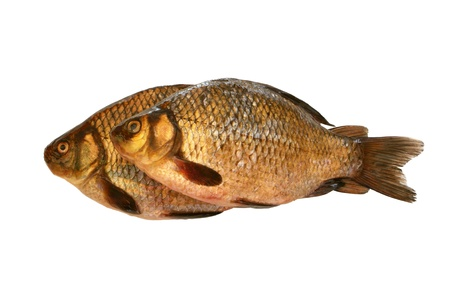 a freshwater fish: Fresh crucians isolated on a white backround