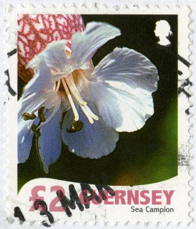 bailiwick: GUERNSEY - CIRCA 2008: A stamp printed in Guernsey shows Sea Campion, series Wild Flora, circa 2008 Editorial