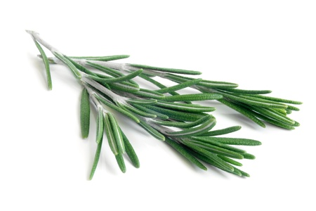 rosemary: Fresh rosemary on a white background