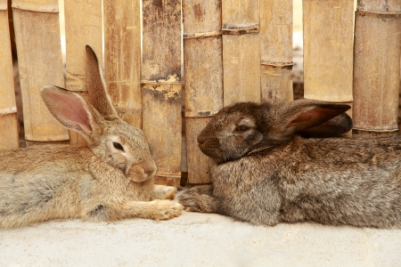 Two rabbits, a horizontal picture photo