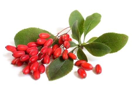 Ripe Berberitzen am Zweig mit grünen Blättern auf einem weißen Hintergrund Standard-Bild - 21652195