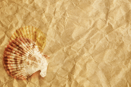 Vintage seashells presented on a sheet of textured paper  photo