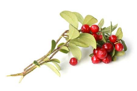 Ripe cowberry on branch with green leaves on a white background Stock Photo - 23031475