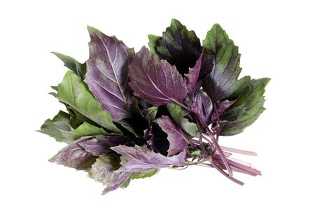 Fresh basil leaves isolated on white background Stock Photo - 23283614