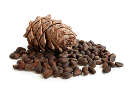 Siberian pine cone and nuts on a white background photo
