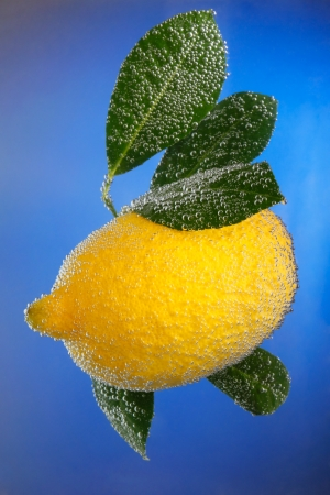 Lemon covered with bubbles on blue background photo