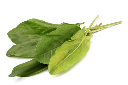 potherb: Alaz�n Hojas verdes sobre fondo blanco Foto de archivo