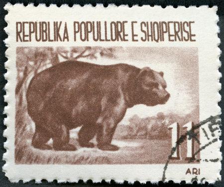 albania: ALBANIA - CIRCA 1961: A stamp printed in Albania shows Brown bear, circa 1961