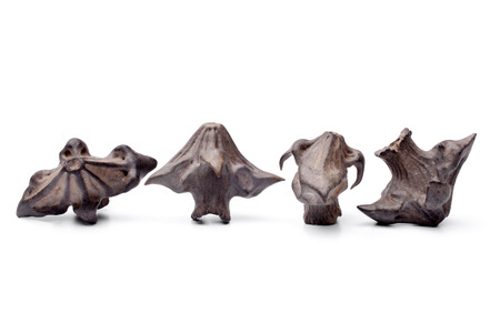 water buffalo: Water chestnut on white background