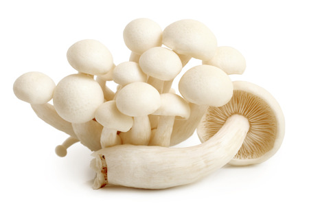 Enokitake mushrooms on white background photo