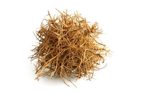 Tumbleweed auf weißem Hintergrund Standard-Bild - 30500931