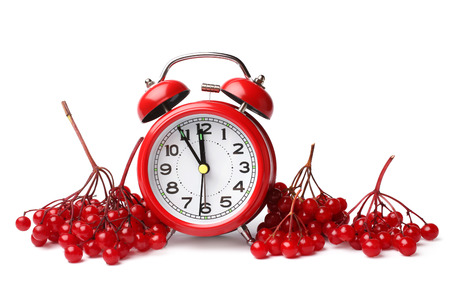 guelder: Alarm clock and red berries of viburnum on white background