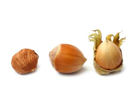 Hazelnuts on white background photo