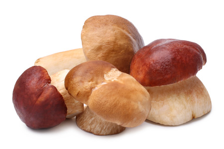 edulis: Cep mushrooms (Boletus edulis) on white background