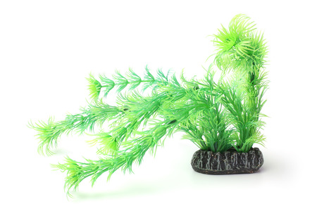 plant life: Plastic seaweed on white background