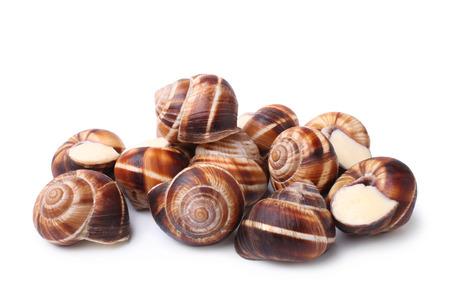 CARACOL: Caracoles comestibles (caracoles) sobre fondo blanco