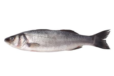 sea bass: Fresh seabass isolated on white background