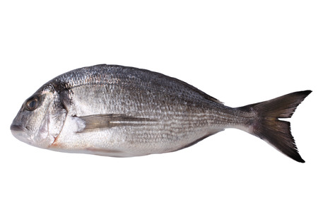 gilthead bream: Fresh gilt-head bream  isolated on white background Stock Photo