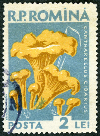 cantharellus cibarius: ROMANIA - CIRCA 1958: A stamp printed in Romania shows cantharellus cibarius golden chanterelle, fungus, series Mushrooms, circa 1958
