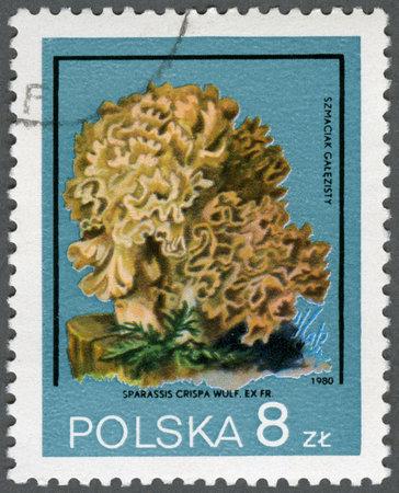 timbre postal: Polonia - alrededor de 1980: Un sello impreso en Polonia muestra Sparassis crispa, la serie Xerocomus parasiticus, alrededor de 1980