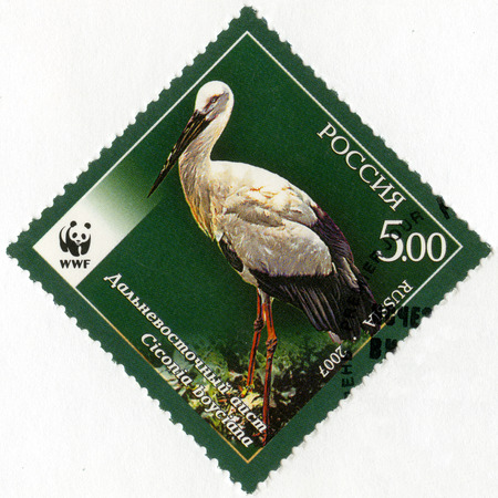 russian: RUSSIA - CIRCA 2007: A stamp printed in Russia shows Fauna Oriental Stork, series the endangered animal species, circa 2007 Editorial