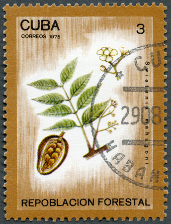 postage stamp: CUBA - CIRCA 1975: A stamp printed in Cuba shows Swietenia mahagoni, series Afforestation, circa 1975