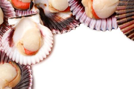 deepsea: Raw scallops on white background Stock Photo