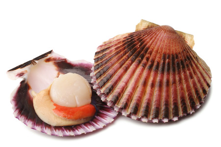 Raw scallops on white background Banque d'images