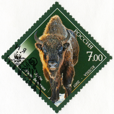 animal species: RUSSIA - CIRCA 2007: A stamp printed in Russia shows Fauna Wisent Bison, series the endangered animal species, circa 2007