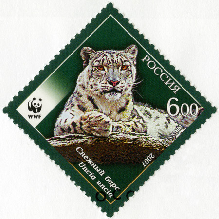 animal species: RUSSIA - CIRCA 2007: A stamp printed in Russia shows Fauna Snow Leopard, series the endangered animal species, circa 2007