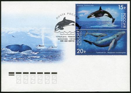 megaptera novaeangliae: RUSSIA - CIRCA 2012: A stamp printed in Russia shows Humpback Whale and Killer Whale, series Fauna of Russia. Whales, circa 2012