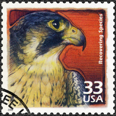 endangered species: UNITED STATES OF AMERICA - CIRCA 2000: A stamp printed in USA show Peregrine falcon, recovery of endangered species, series Celebrate the Century, 1990s, circa 2000