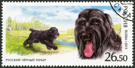 fauna: RUSSIA - CIRCA 2015: A stamp printed in Russia shows Black Russian Terrier, series fauna, service breeds of dogs, circa 2015 Editorial