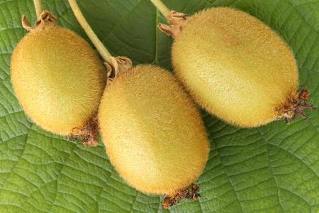 actinidia deliciosa: Kiwi fresh fruit on green leaf background Stock Photo
