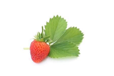 fresh leaf: Fresh strawberry with leaf on white background