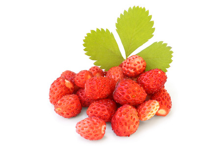 Wild strawberry with green leaf on white background