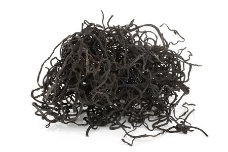 흰색 배경에 말린 된 Sargassum Pallidum 스톡 콘텐츠