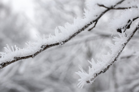 Frozen ice crystals on the branches, for backgrounds or textures