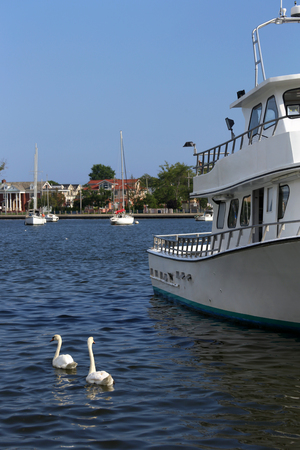 Yachts and white swans in Sheepshead Bay, New York, USA