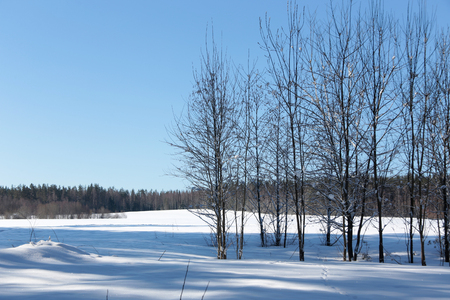 Winter beautiful landscape with trees covered snow, horizontal picture Reklamní fotografie